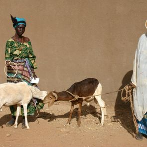 Mouton - Burkina Faso - Aimer-Agir Association Suisse Raoul Follereau